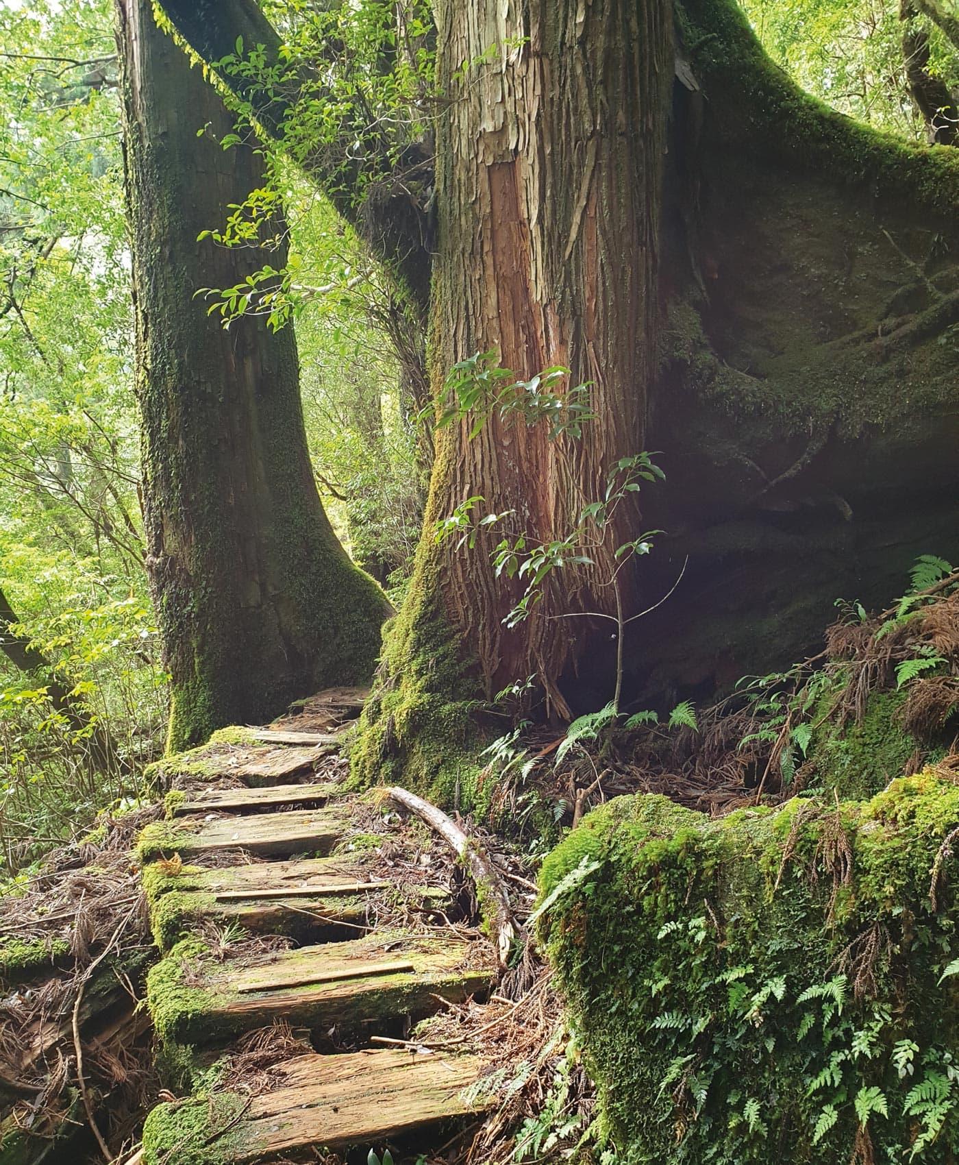 Japanreise mit Baby: Magischer Wald // HIMBEER