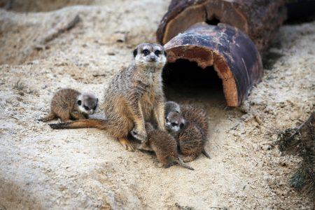 Mini-Tipps: Zoobesuch in Berlin mit Baby und Kleinkind // HIMBEER
