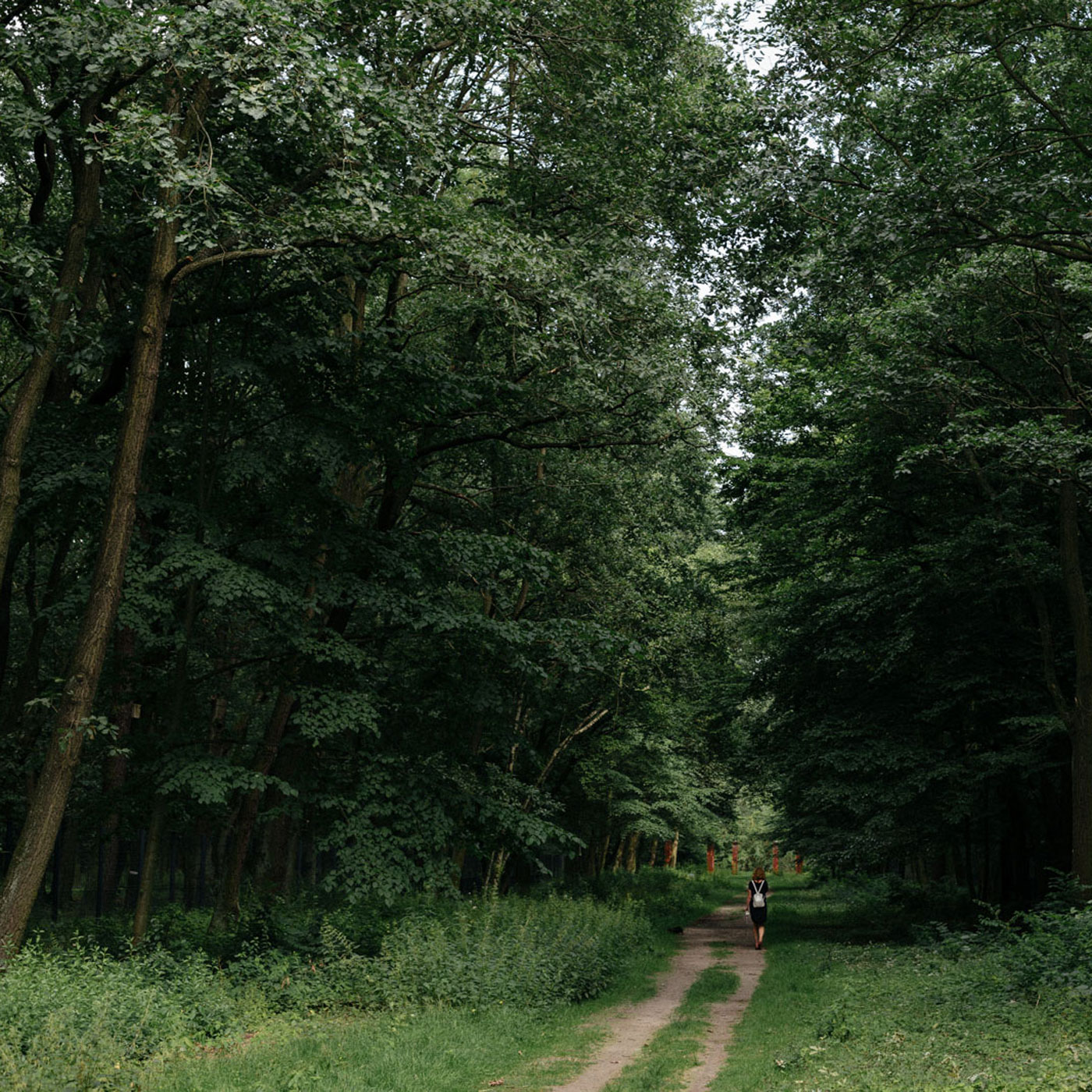 Ausflug mit Kindern in Berlin: Einsame Waldwege // HIMBEER