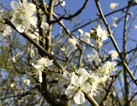Blauer Himmel und Blüten stimmen uns froh // HIMBEER