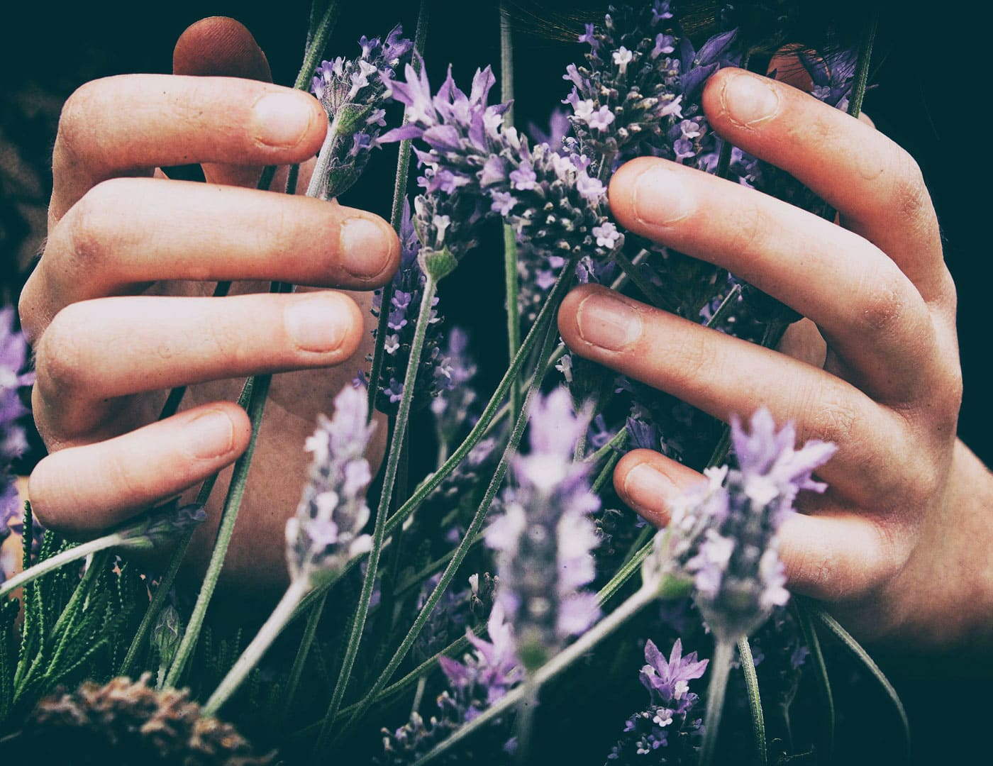 Lavendel – Wohlfühlduft // HIMBEER
