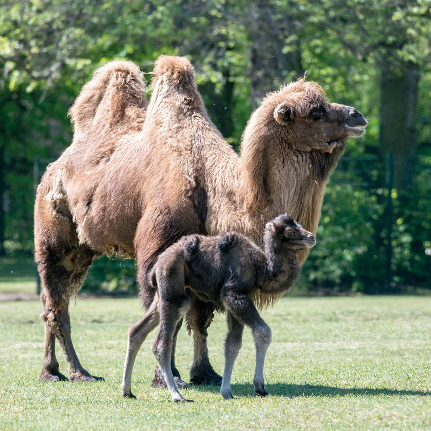 Ausflugstipps im Sommer: Tierpark Berlin //HIMBEER