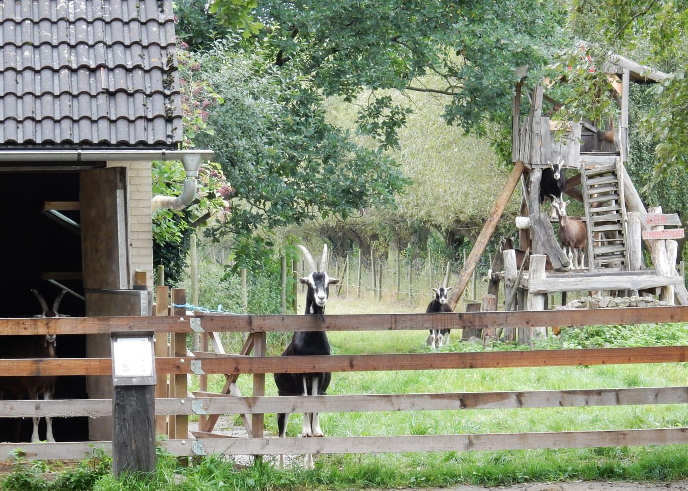 Nutzt das erste Juliwochenende für einen Ausflug auf den Vierfelderhof in Gatow // HIMBEER