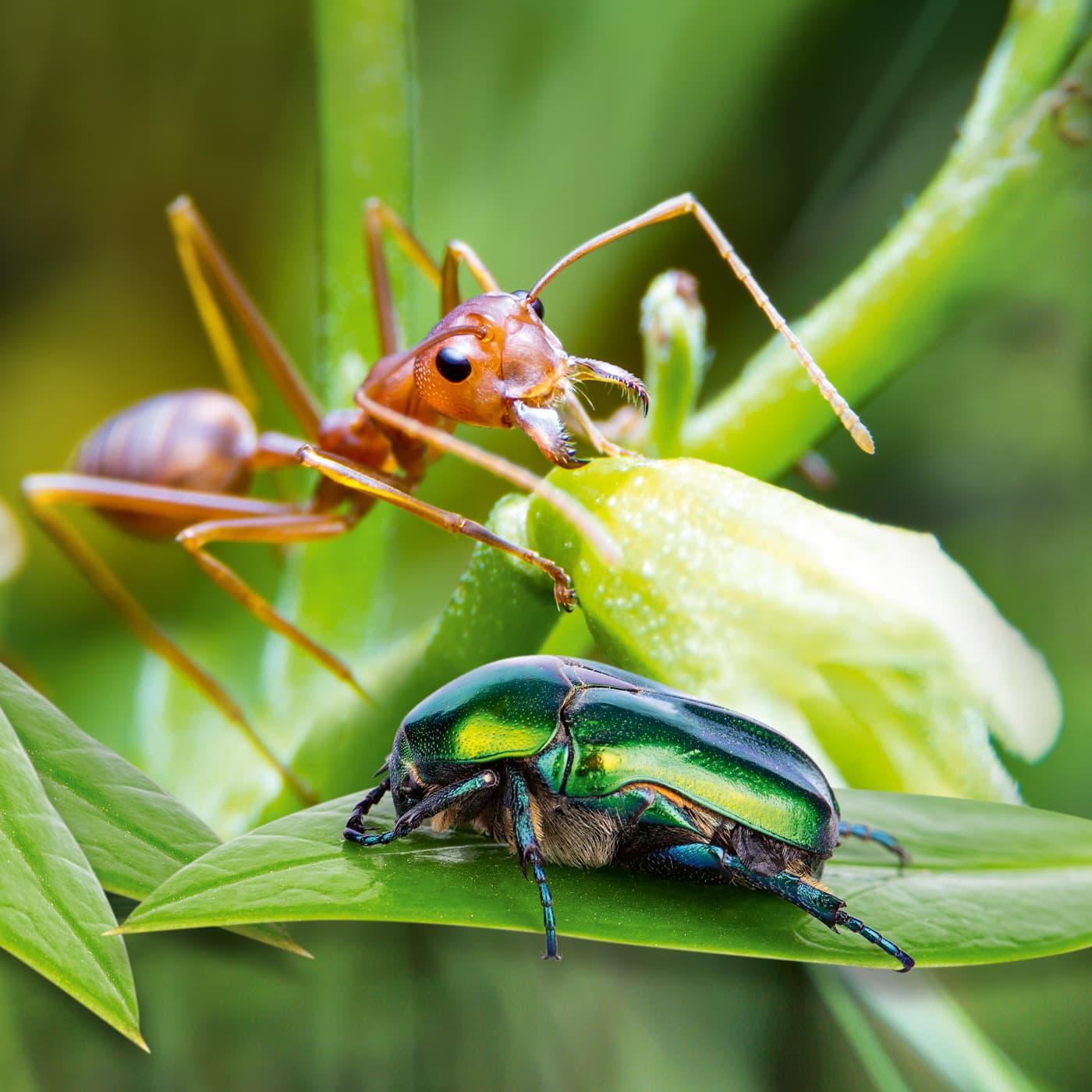 Spaß am Wochenende – Ausflug zur Ausstellung Insekten – stark und schön in der Bioshäre Potsdam // HIMBEER