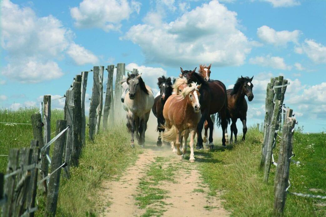 Pferdeland Brandenburg: Urlaub & Auszeit mit Pferden // HIMBEER
