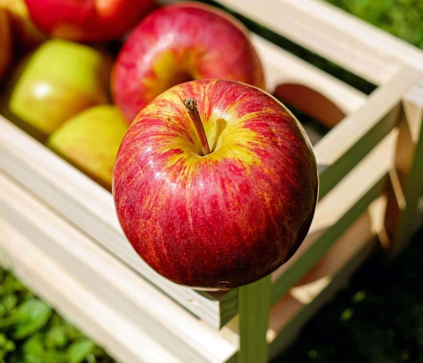 Apfelernte in Brandenburg: Kiste voller heimischer Äpfel mit Kindern ernten // HIMBEER