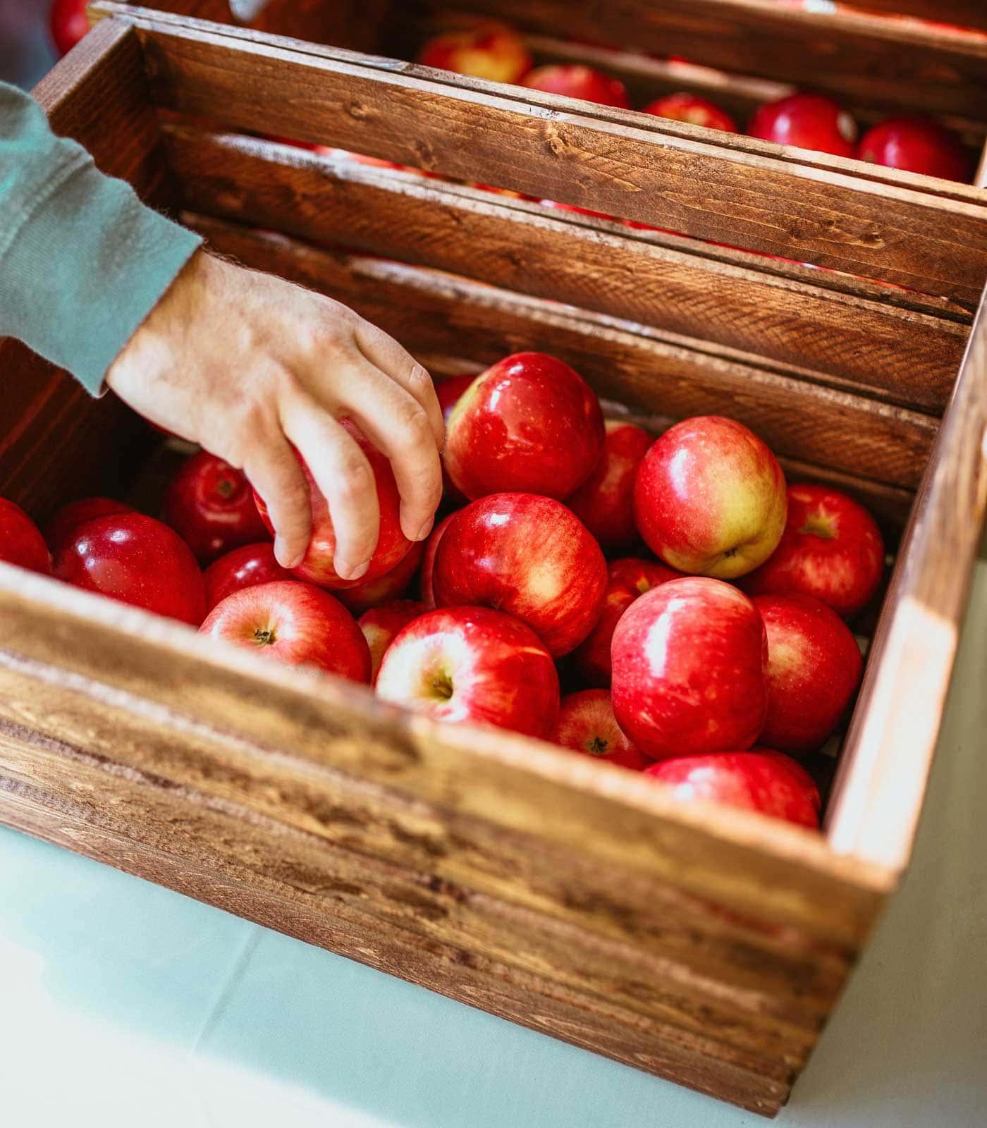 Schöner Herbstausflug mit Kindern, um frisches Obst selbst zu ernten // HIMBEER