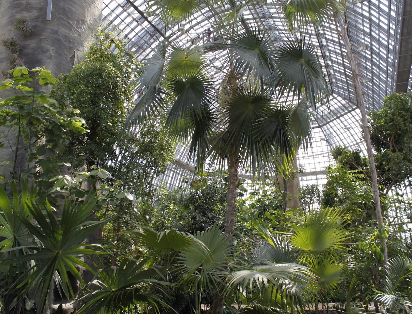 Das letzte Oktoberwochenende im Botanischen Garten Berlin genießen // HIMBEER