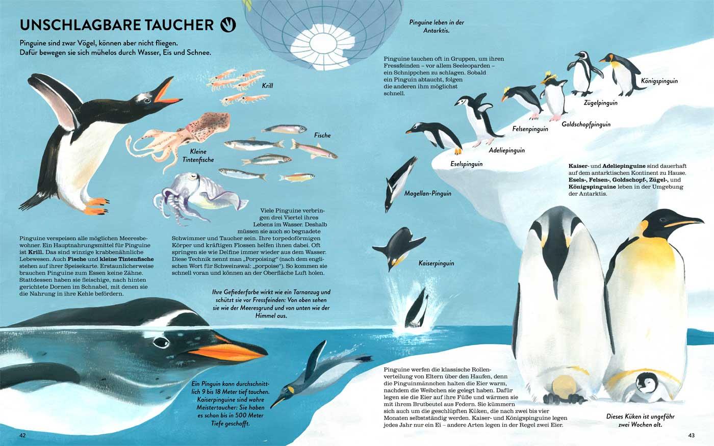 Kinderbuch: Eisbären und Pinguine // HIMBEER
