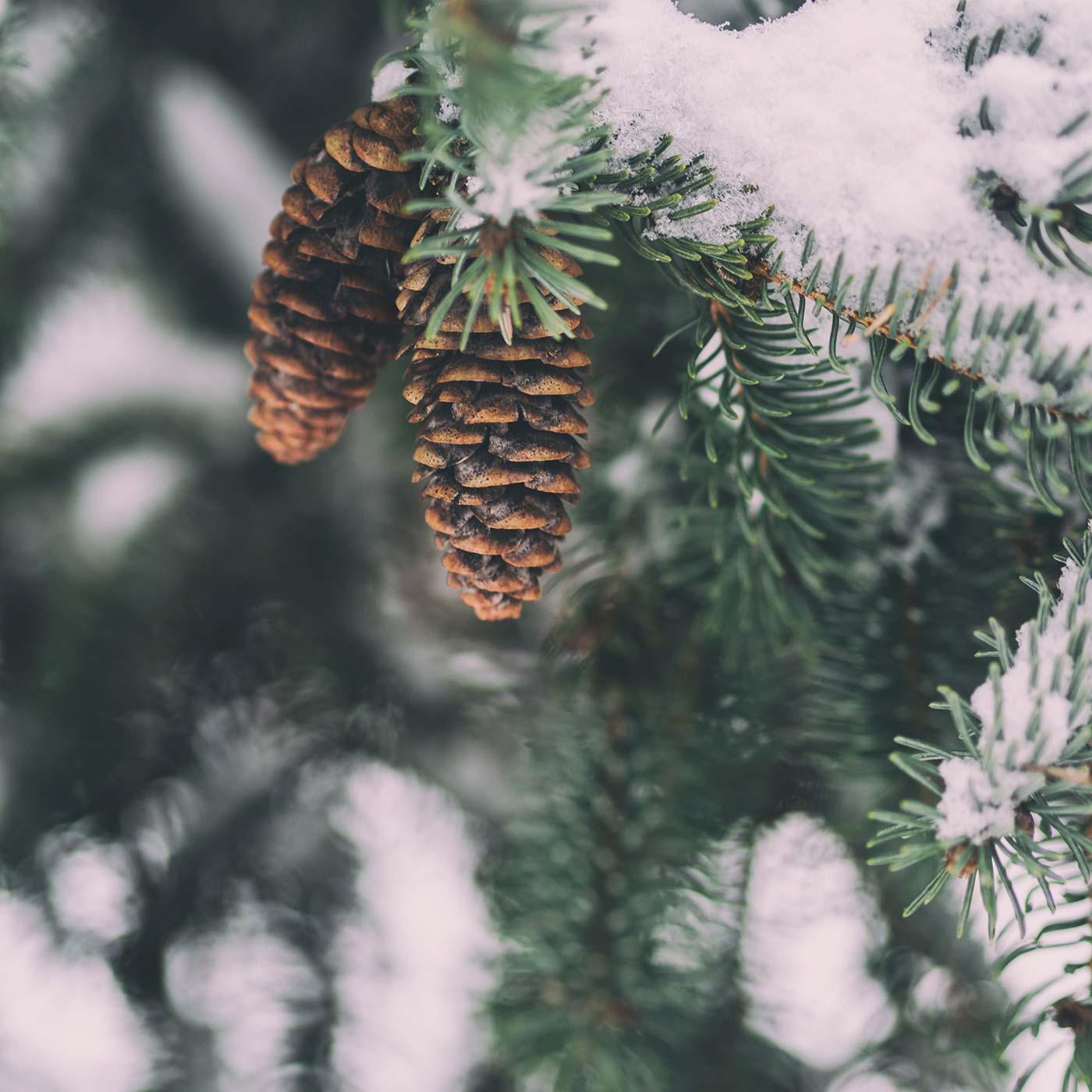 Winterliche Spaziergänge durch die Natur mit Kindern // HIMBEER