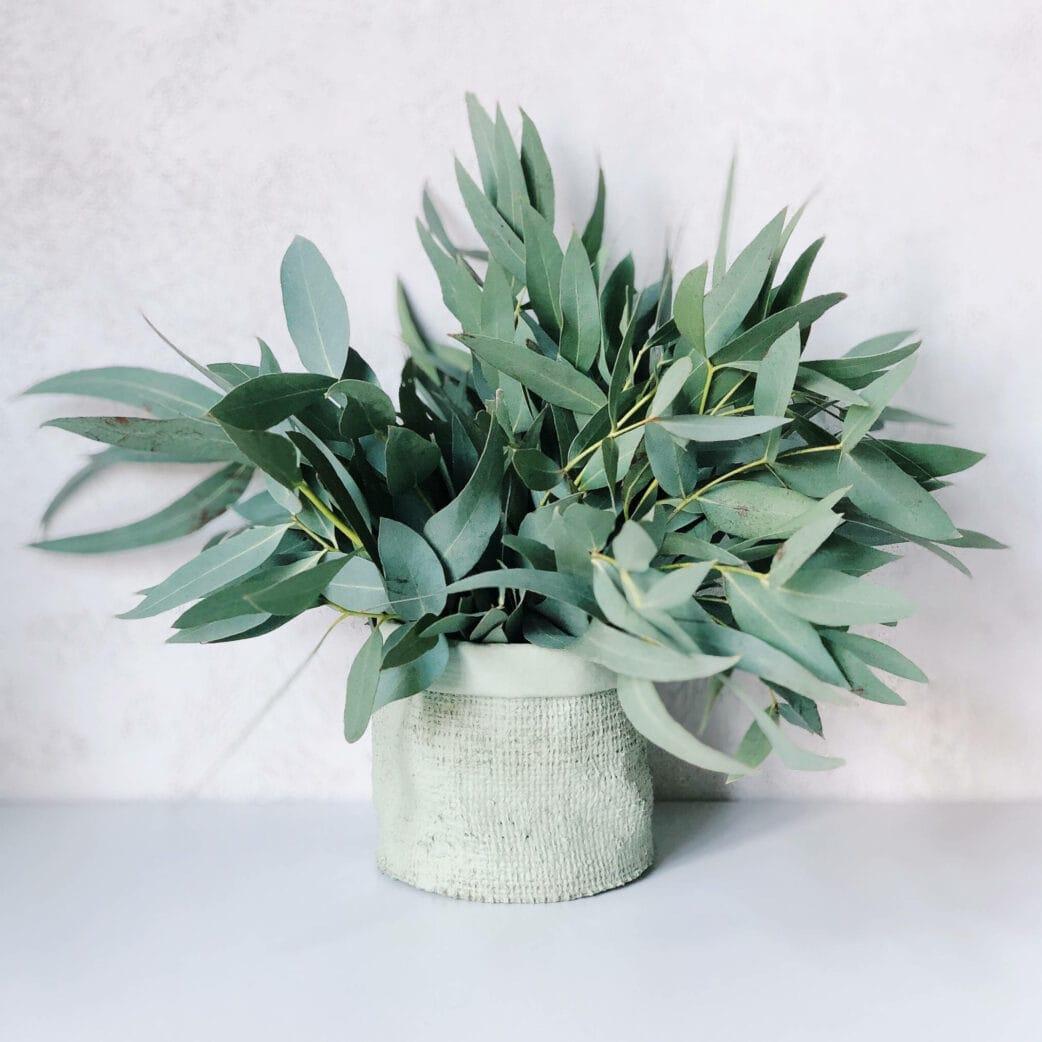 Eukalyptus für die Geschenkanhänger // HIMBEER