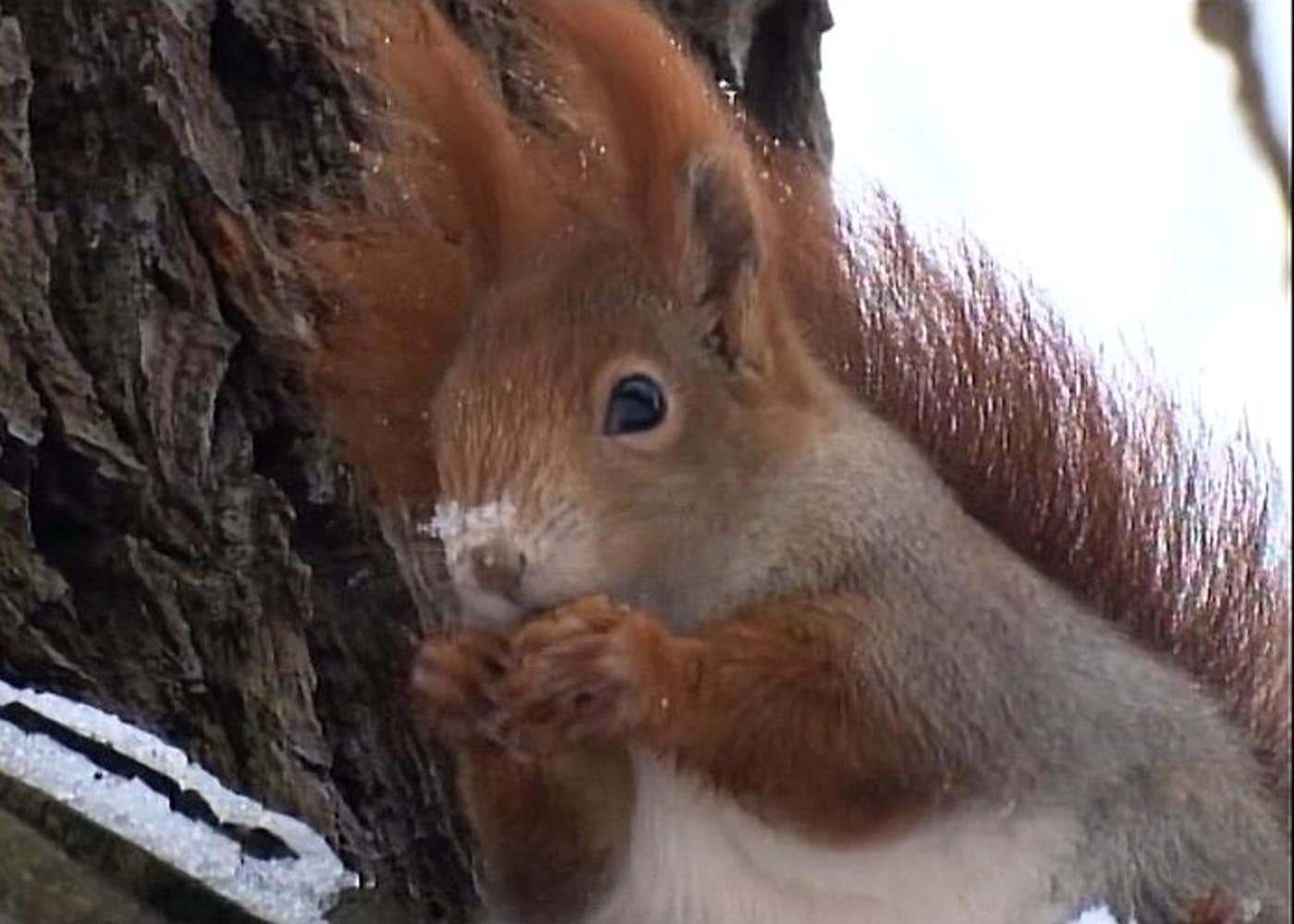 Spatzenkino im Nest im Januar: Online-Kinderkino für Kitakinder // HIMBEER