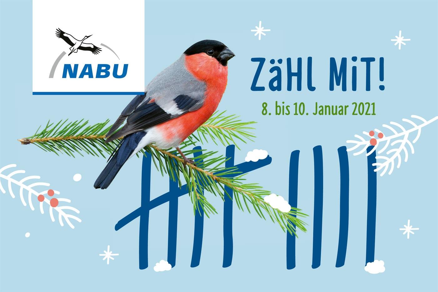 NABU Stunde der Wintervögel 2021 – Mitmachaktion // HIMBEER