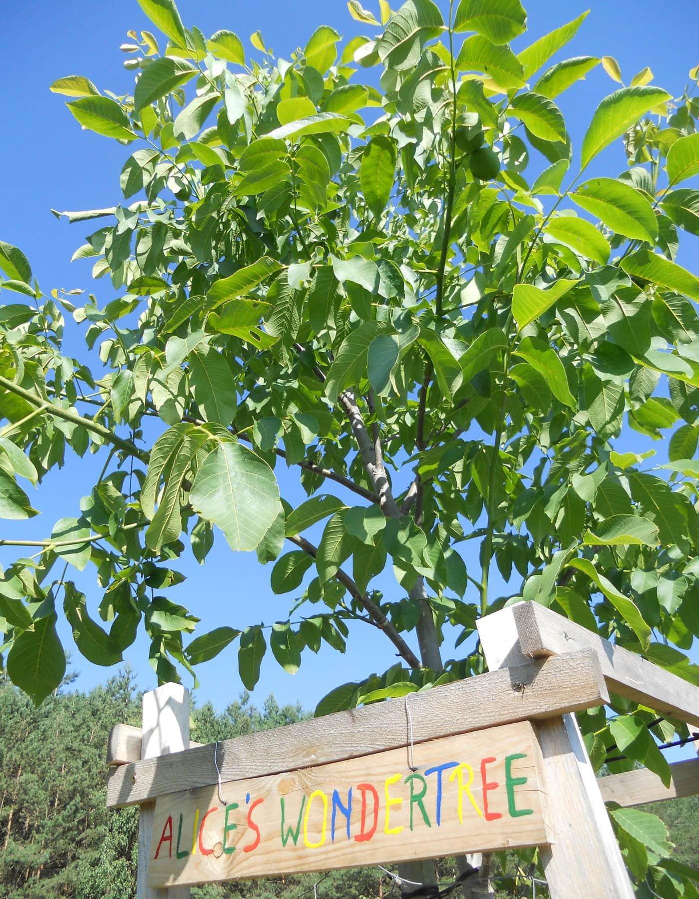 Baumpatenschaften als Geschenk // HIMBEER