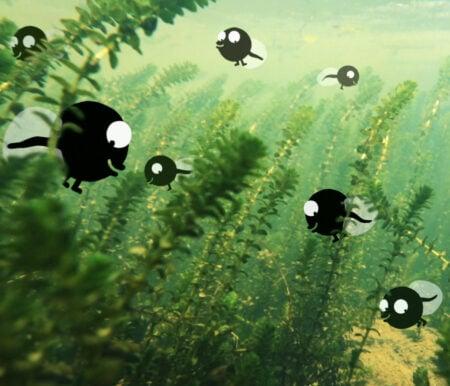 Spatzenkino im Nest: Kuap // HIMBEER