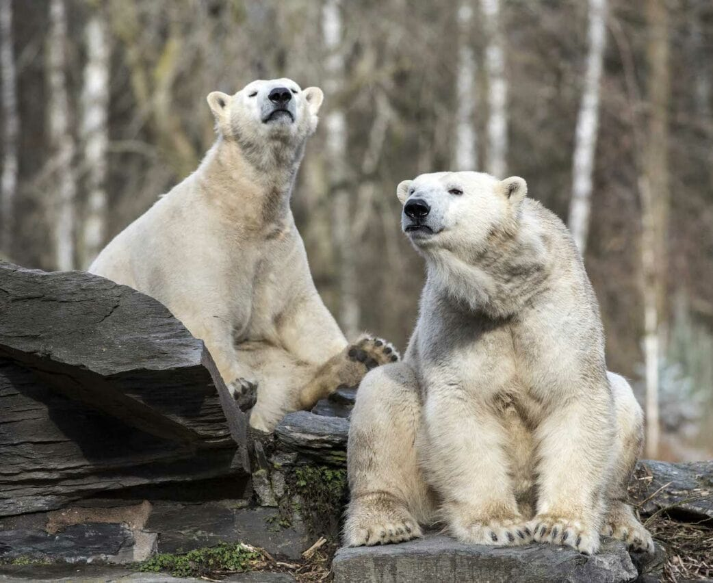 Tonja und Hertha im Tierpark Berlin // HIMBEER