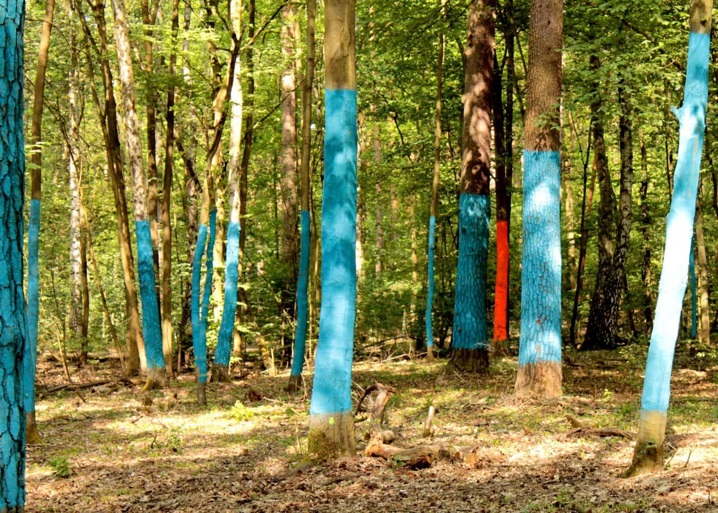Wald.Berlin.Klima – Outdoor-Ausstellung im Grunewald // HIMBEER