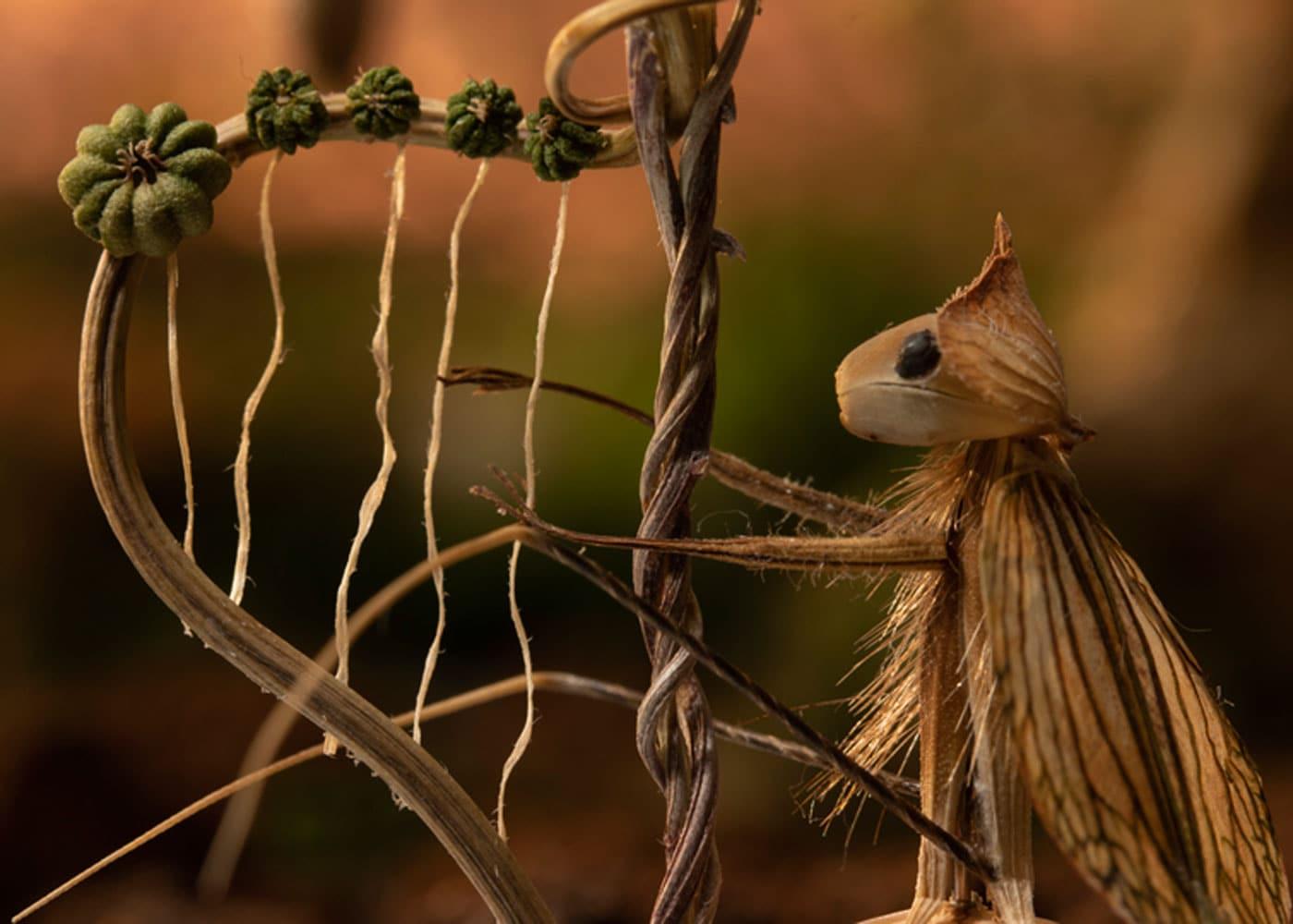 Kinder-Kurzfilme: Natur // HIMBEER