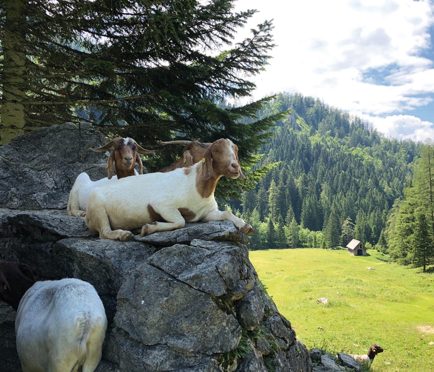 Familienurlaub in Österreich: Natur, Tiere, Berge erleben mit Kindern // HIMBEER