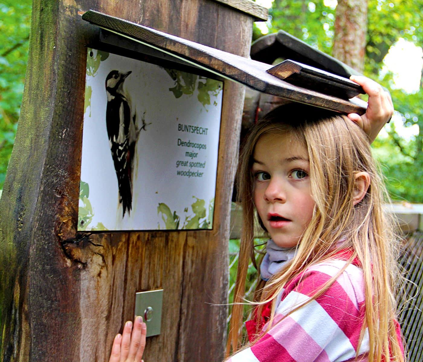Urlaub mit Kindern an der Mecklenburgischen Seenplatte: Bärenwald // HIMBEER