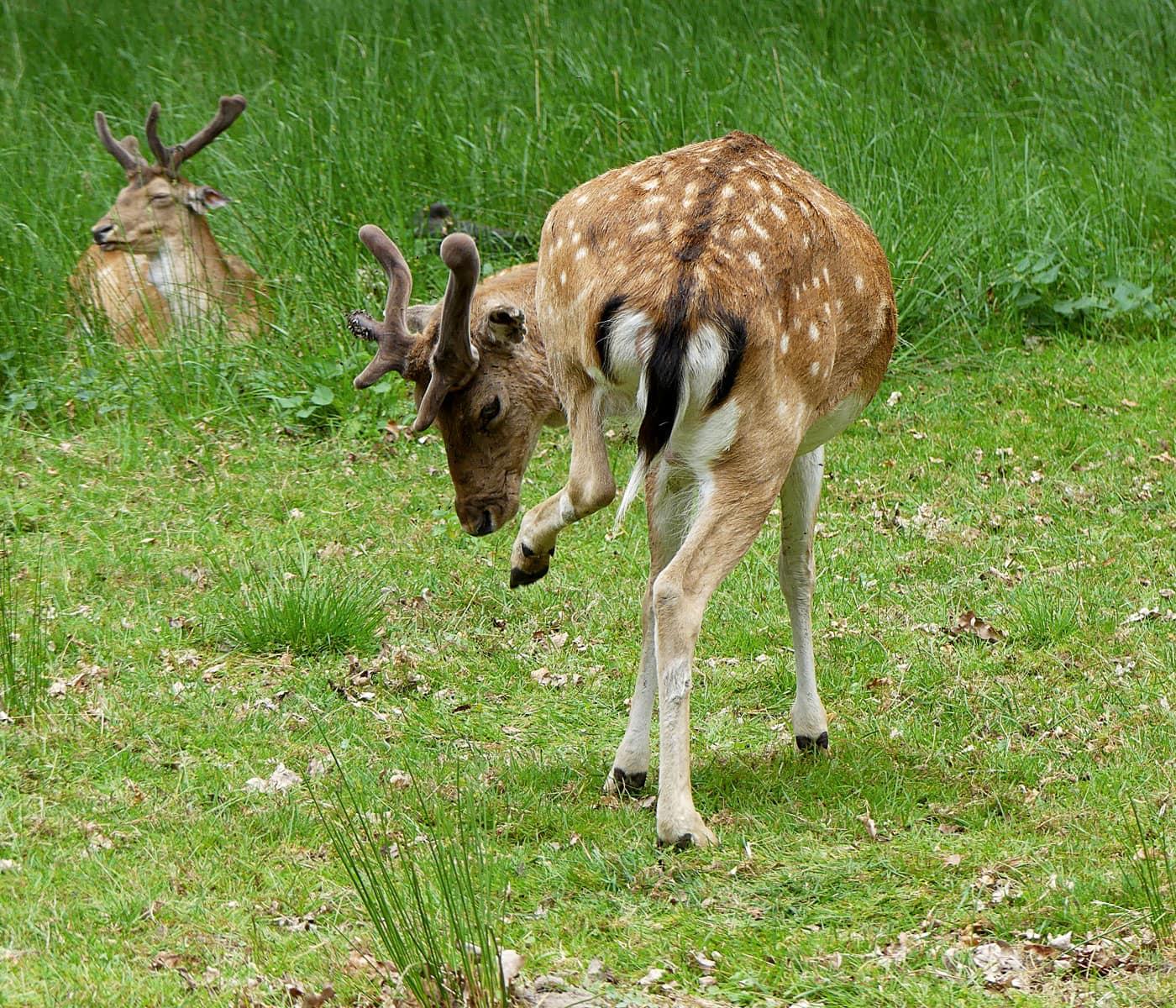 Urlaub mit Kindern an der Mecklenburgischen Seenplatte: Tierwelten // HIMBEER