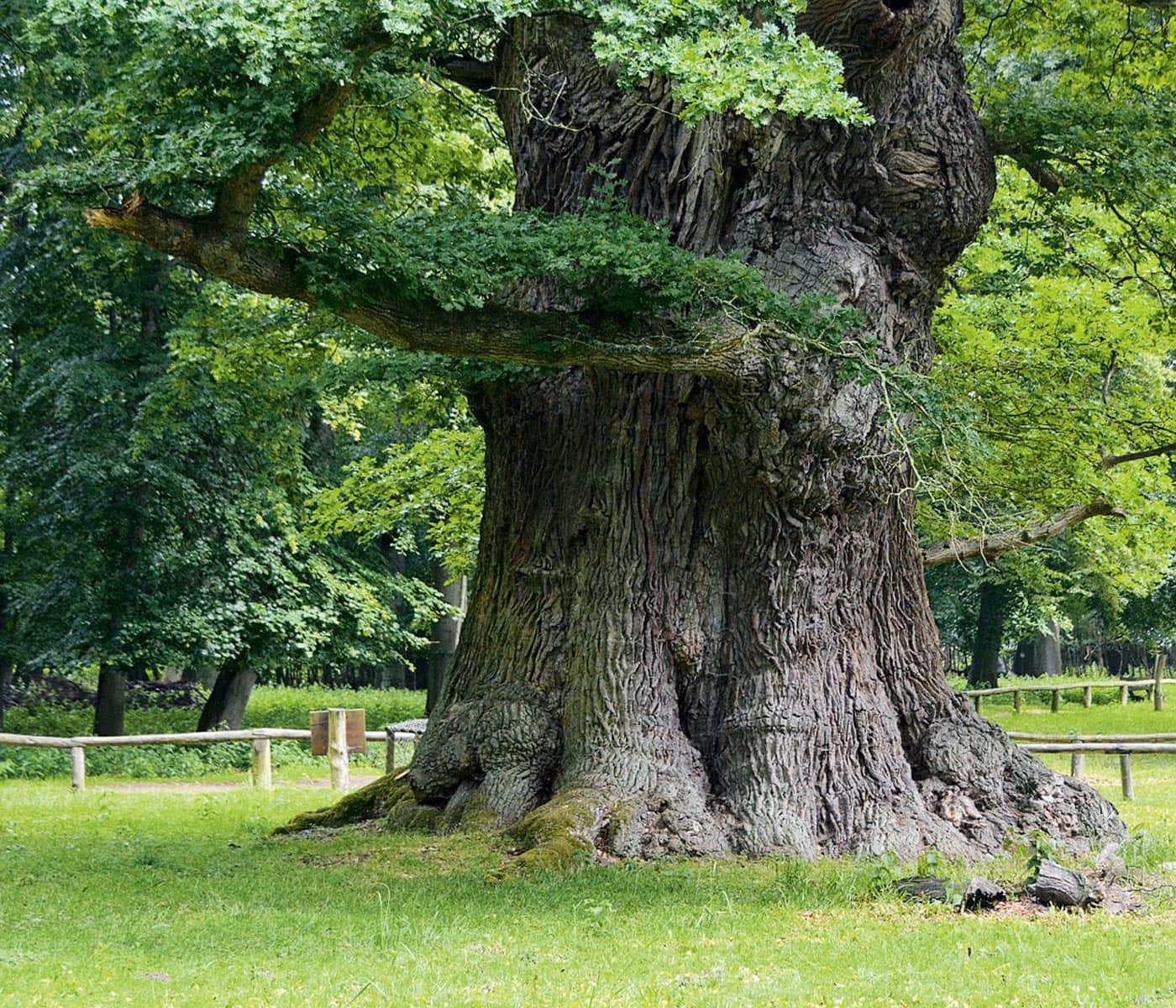 Familienurlaub an der Müritz: Uralter Baumbestand // HIMBEER