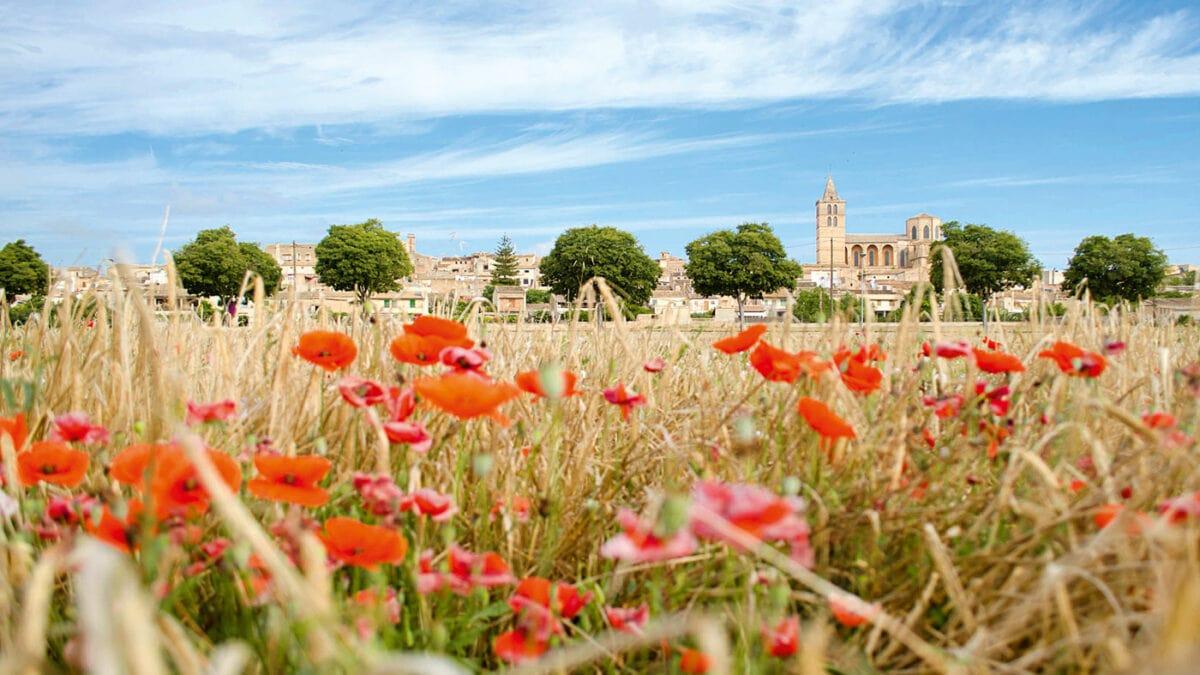 Den Sommer mit Kindern auf Mallorca verlängern: Sineu // HIMBEER