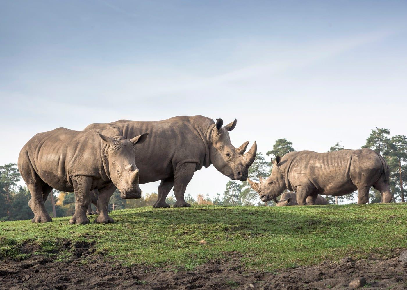 Reisen mit Kindern: Breitmaulnashörner im Serengeti-Park Hodenhagen // HIMBEER