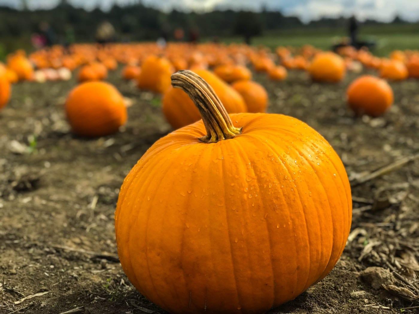 Mini-Tipps im Oktober: Erntefest auf der Domäne Dahlem // HIMBEER
