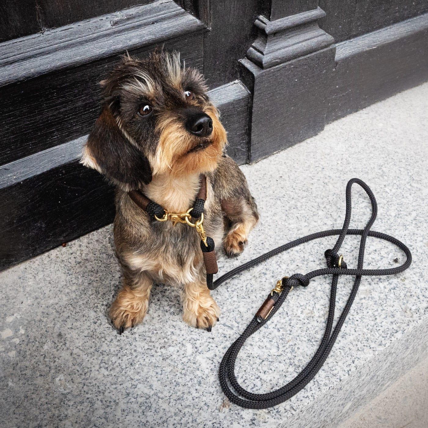 Schönes für den Hund: Leinen von isartau // HIMBEER