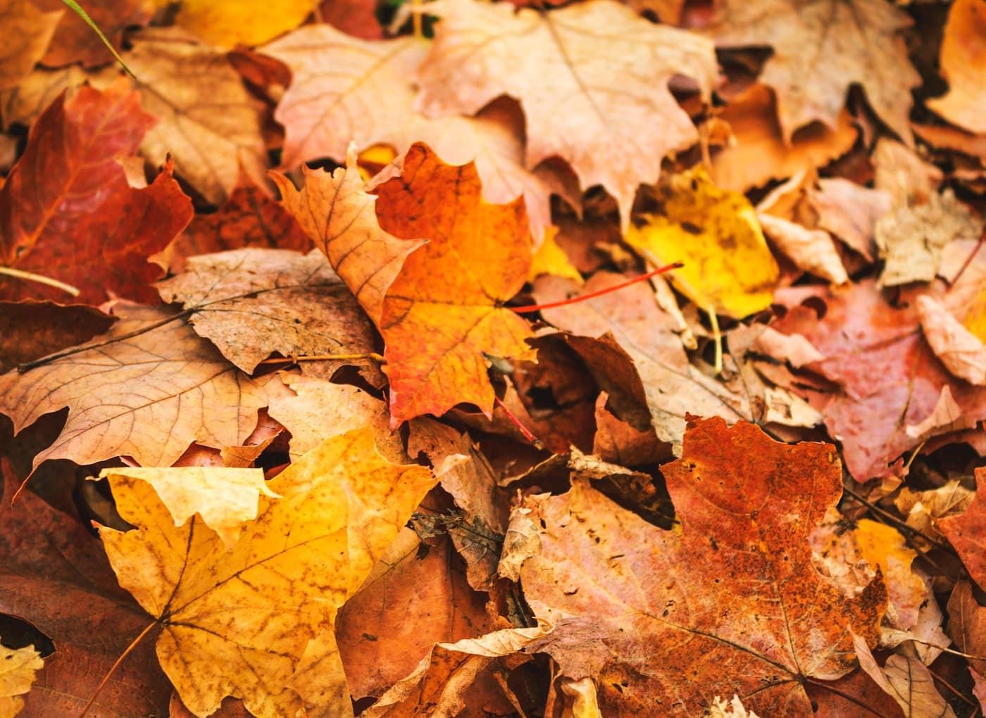 Herbst-Tipps für Familien mit Kindern am Wochenende // HIMBEER